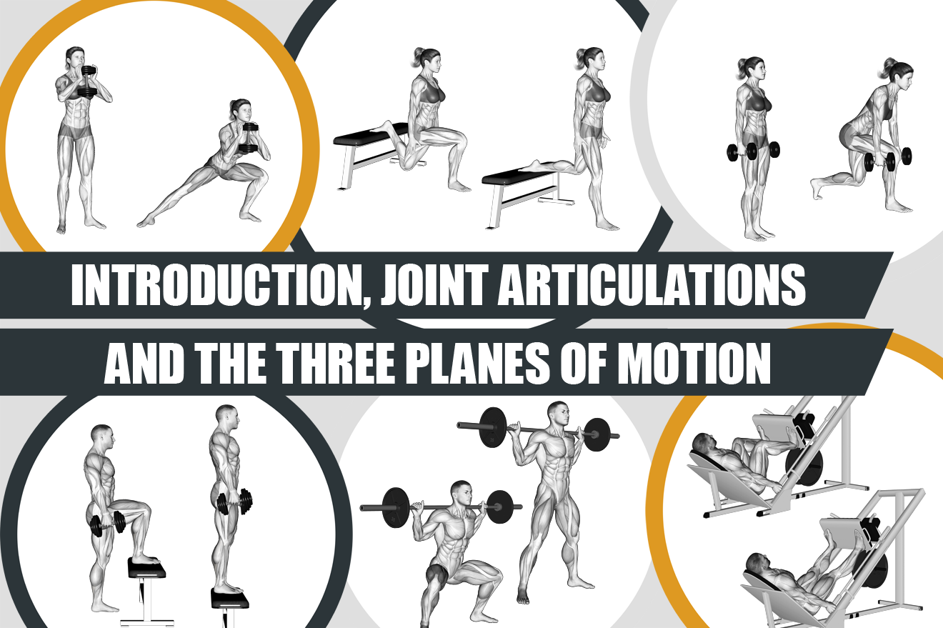Introduction, joint articulations and the three planes of motion