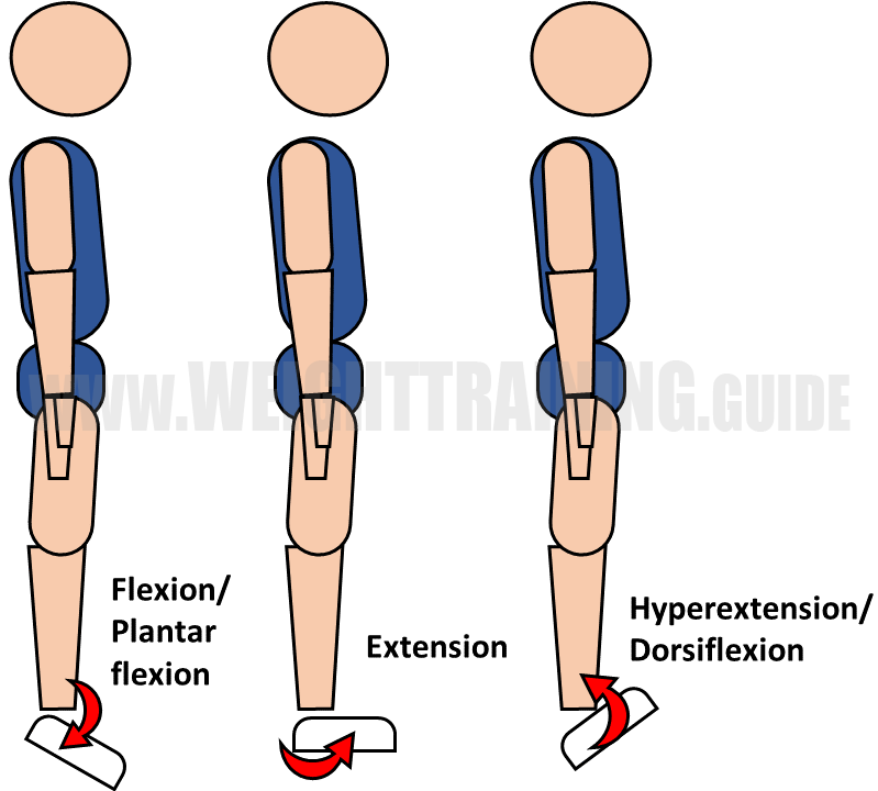 Flexion, extension, hyperextension of ankle
