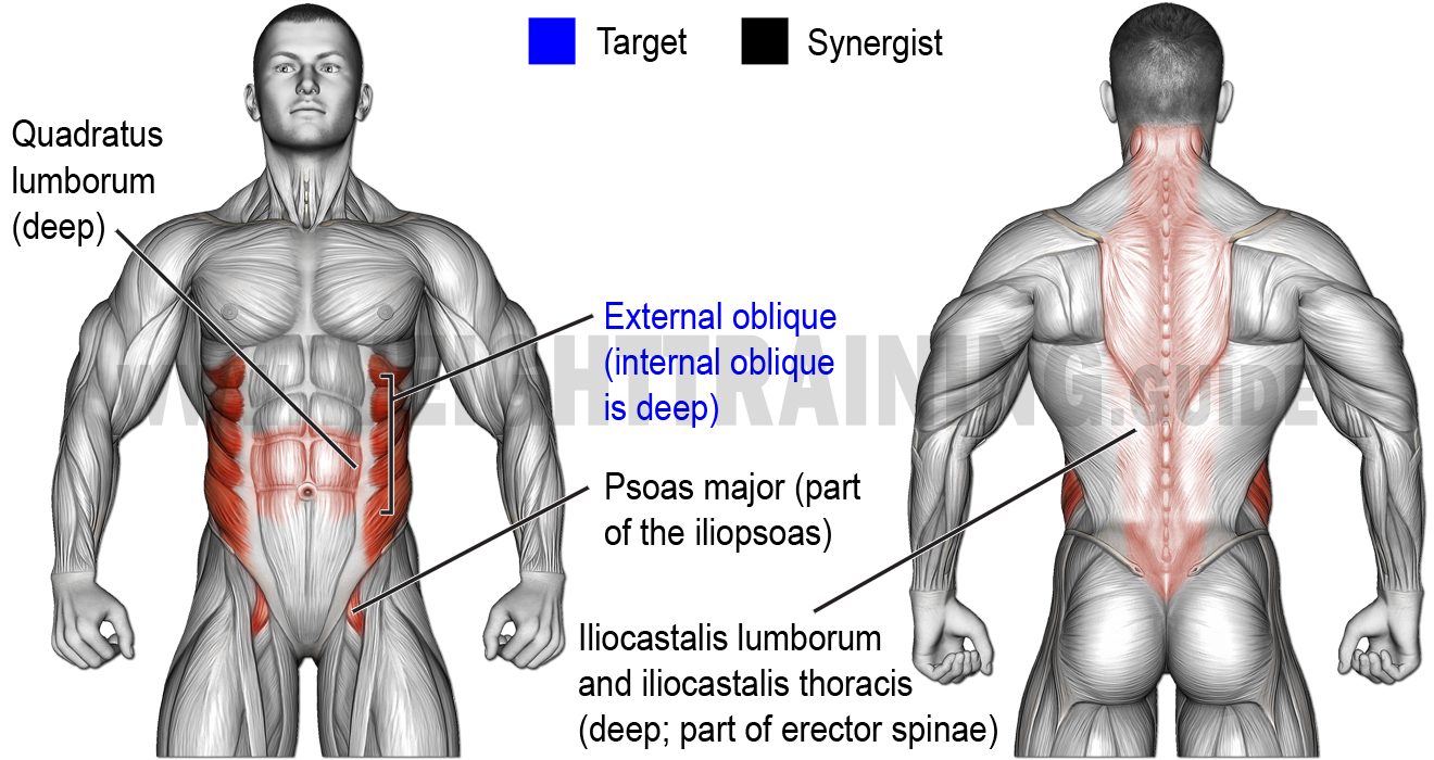 Muscles activated by seated-waist-rotation and lateral-waist-flexion exercises