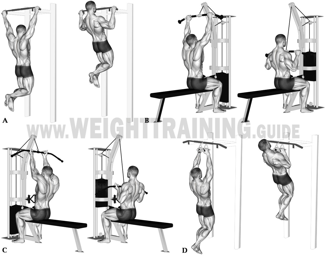 Vertical pulling exercises