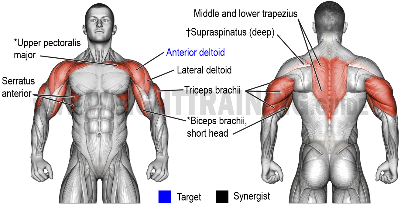 Muscles activated by vertical pushing exercises