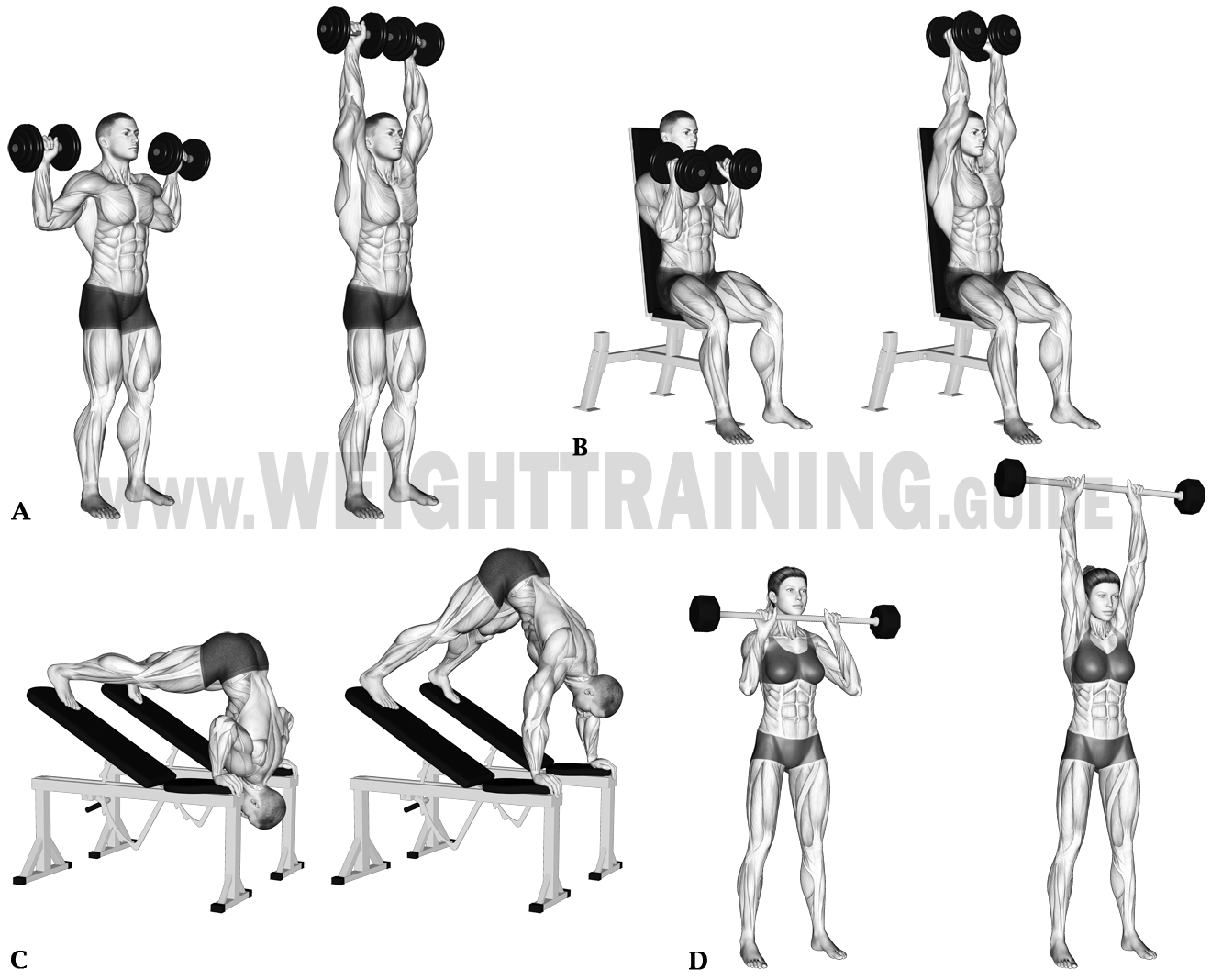 Vertical pushing exercises