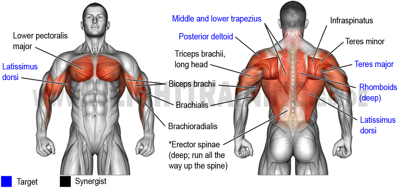 Muscles activated by horizontal pulling exercises, upper arms close to torso