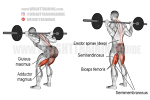 Barbell bent-knee good morning exercise