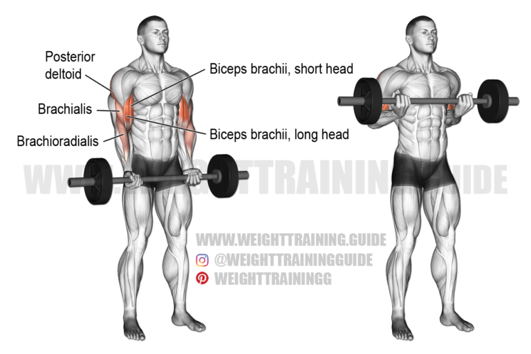 Barbell drag curl