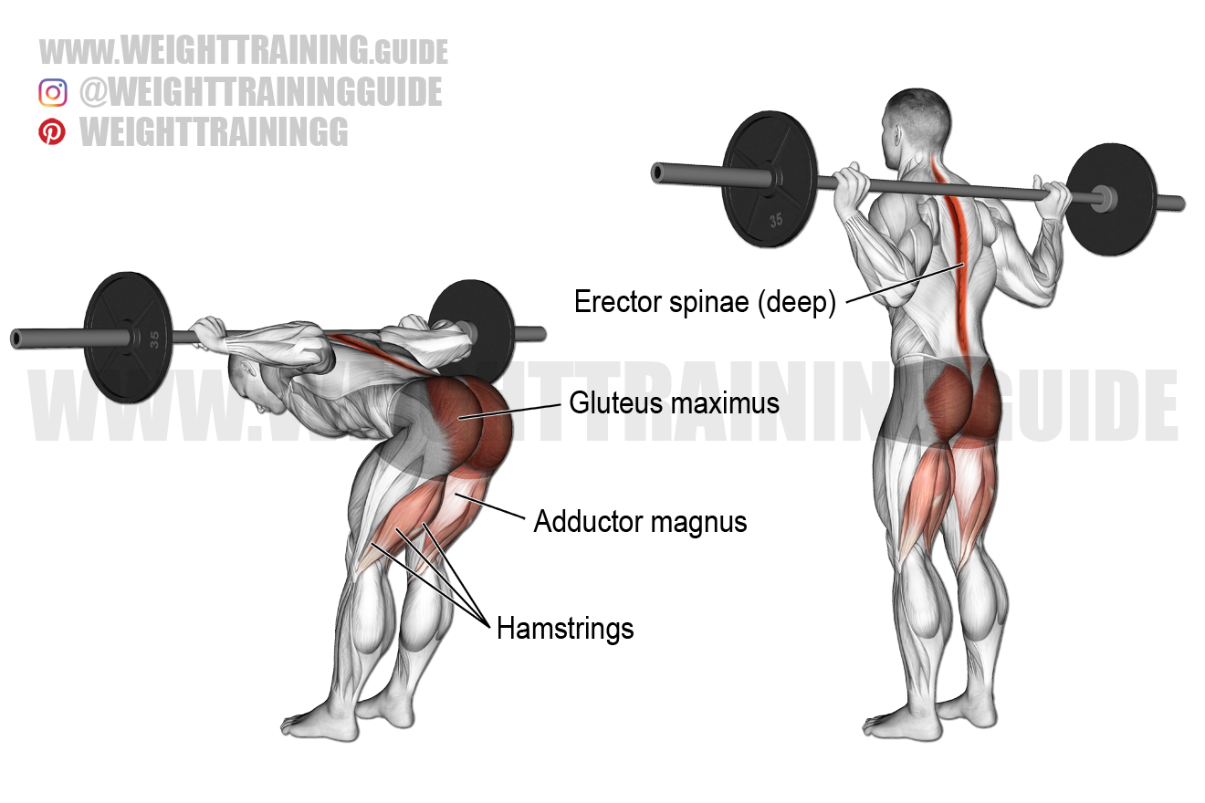 Barbell good morning exercise