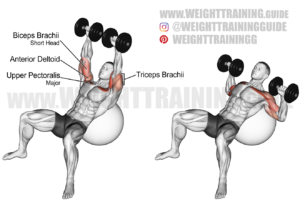 Incline dumbbell press on a stability ball exercise