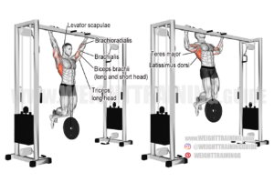 Weighted pull-up exercise