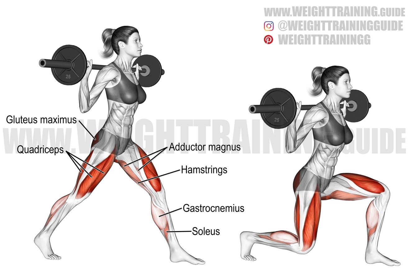 Barbell split squat exercise