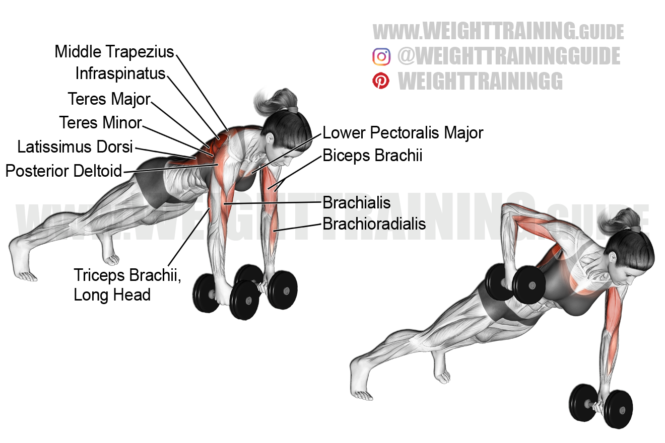 Dumbbell renegade row exercise