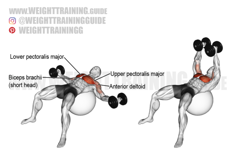 Dumbbell fly on a stability ball