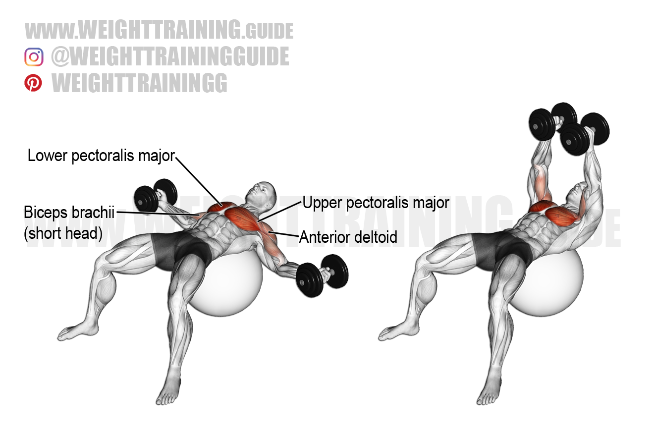 Dumbbell fly on a stability ball exercise