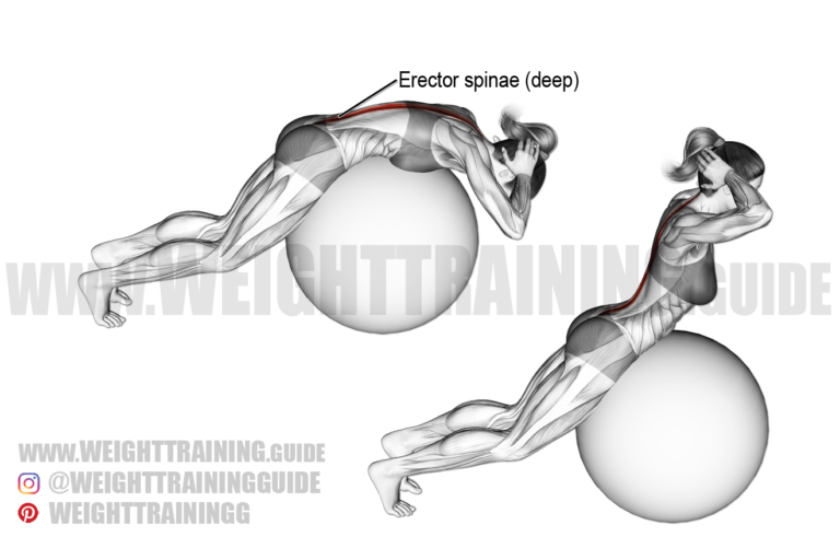Back extension on stability ball