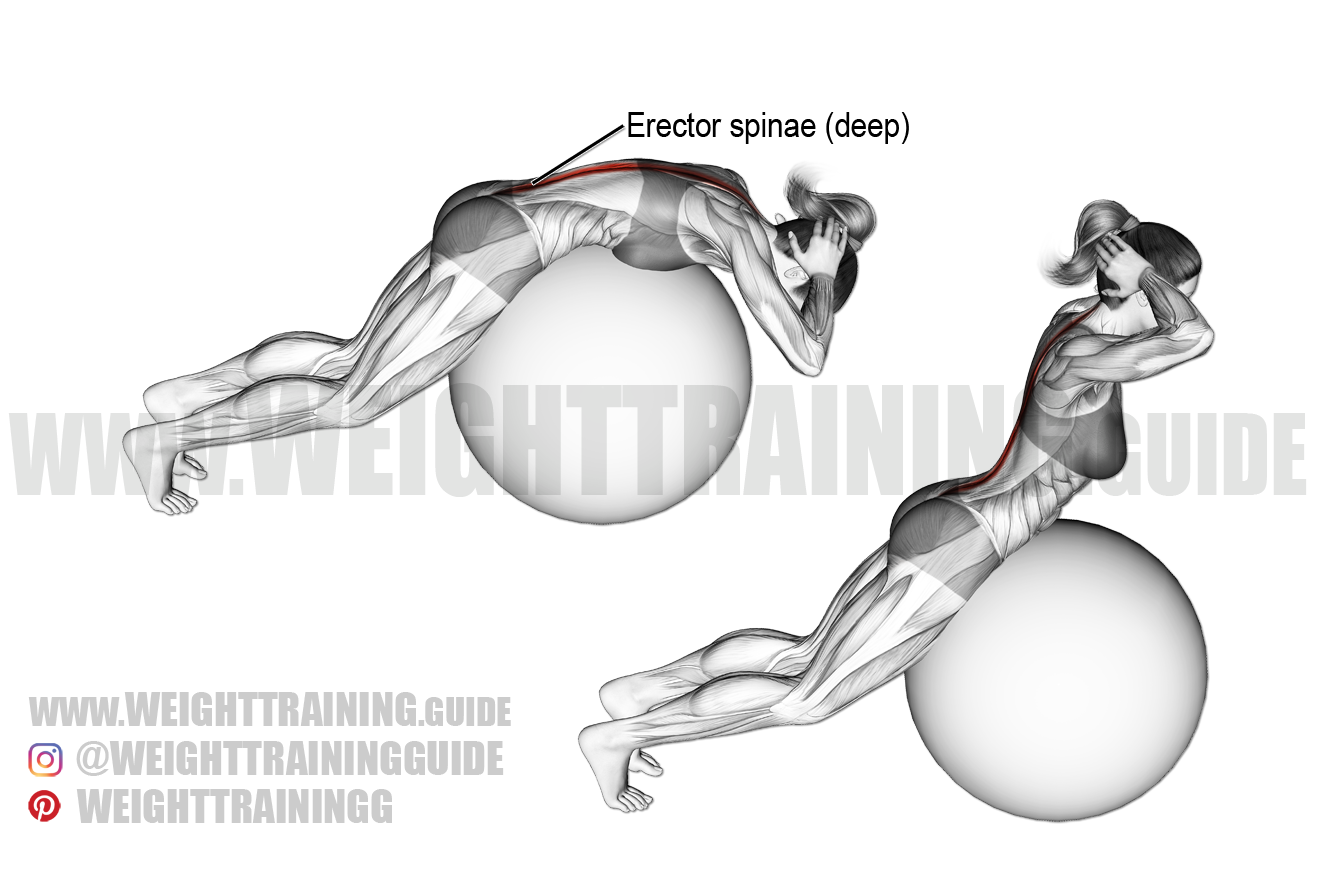 Back extension on stability ball exercise