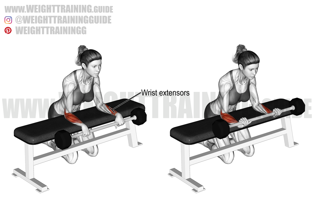 Barbell reverse wrist curl over bench exercise