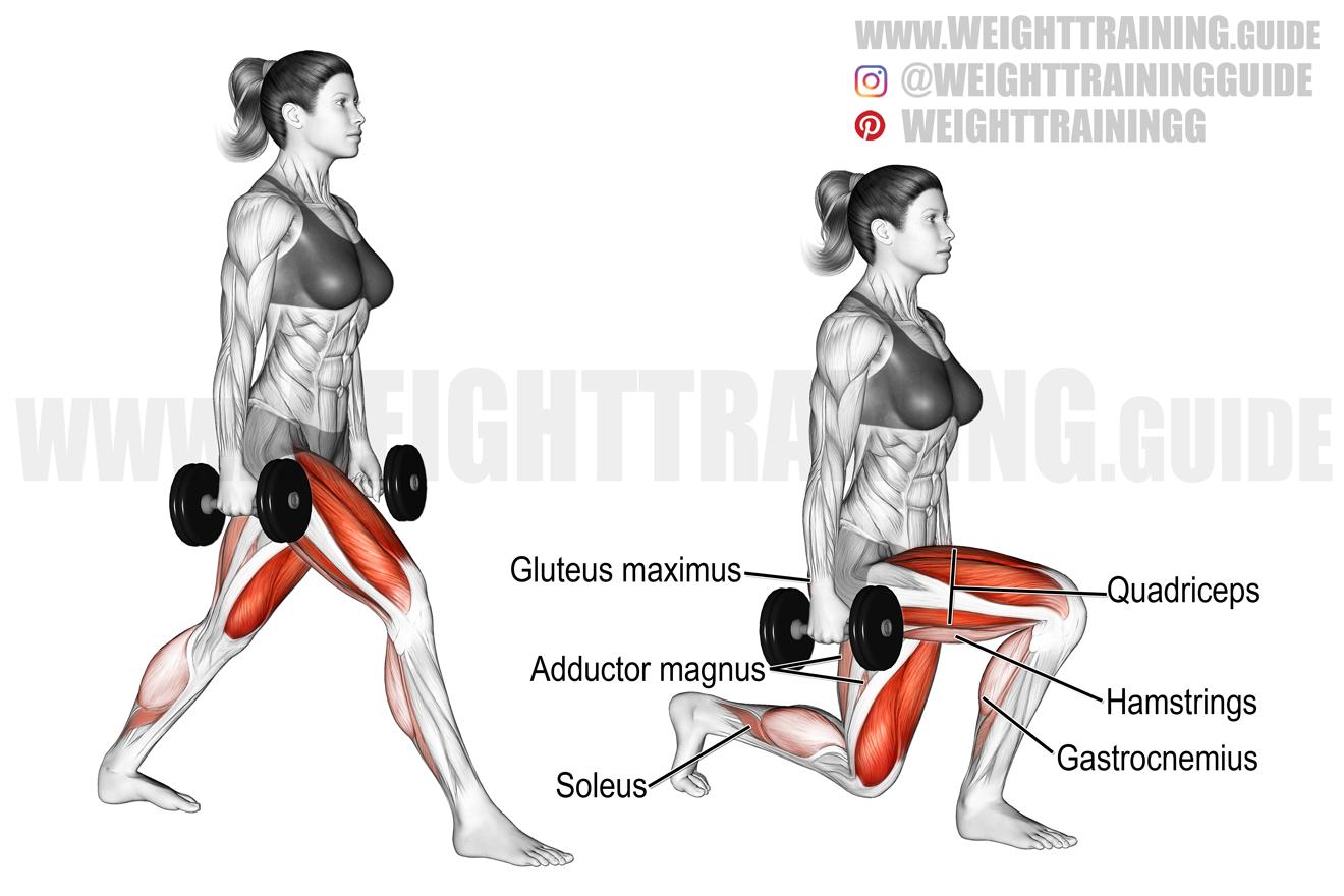Dumbbell split squat exercise