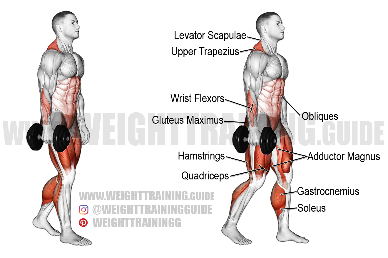 Dumbbell suitcase carry exercise